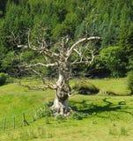 Мертвое дерево, яркий солнечный свет, жуткая тень Стоковые Фотографии RF