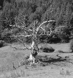 Мертвое дерево, яркий солнечный свет, жуткая тень, monochrome Стоковая Фотография
