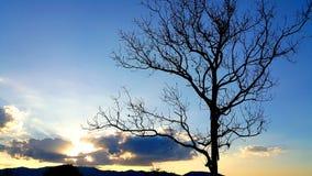 Мертвое дерево Стоковые Изображения RF