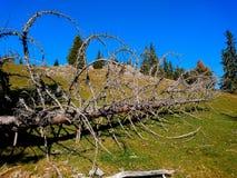 Мертвое дерево стоковое фото rf