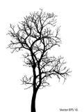 Мертвое дерево без сделанной эскиз к иллюстрации вектора листьев Стоковые Фотографии RF