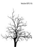Мертвое дерево без сделанной эскиз к иллюстрации вектора листьев Стоковая Фотография RF