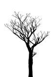 Мертвое дерево без сделанной эскиз к иллюстрации вектора листьев Стоковые Фото