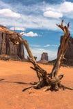 Мертвое дерево в долине памятника, Аризоне Стоковая Фотография