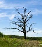 Мертвое дерево в прерии Стоковые Изображения