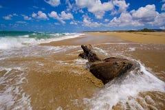 Мертвое дерево в прибое песка Стоковое фото RF