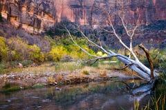 Мертвое дерево в реке девственницы стоковое изображение