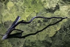 Мертвое дерево и своя тень Стоковое Изображение RF