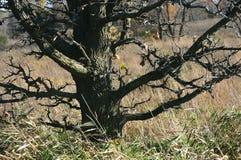 Мертвое дерево между травой прерии Стоковая Фотография