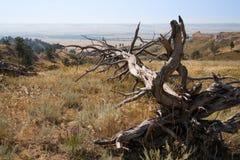 Мертвое дерево на Ридже на парке штата Робинсона форта, Небраске Стоковое Изображение RF