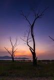 Мертвое дерево на twilight времени Стоковые Фотографии RF