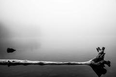 Мертвое дерево отраженное в озере Стоковое Изображение RF