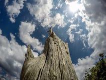 Мертвое дерево смотря на небо с облаками Стоковые Изображения