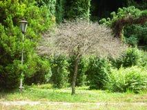 Мертвое дерево среди прожития Стоковое Изображение RF