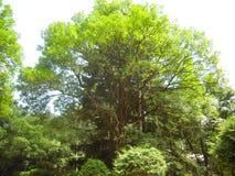 Мертвое дерево среди прожития Стоковая Фотография RF