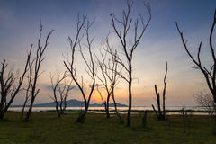 Мертвое дерево с заходом солнца Стоковое Изображение RF