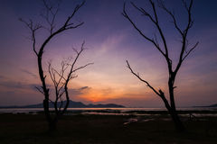 Мертвое дерево с заходом солнца Стоковое Изображение