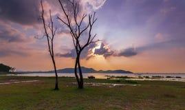 Мертвое дерево с светом бога Стоковая Фотография RF