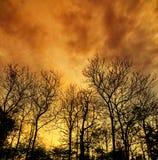 Мертвое дерево с солнечным светом Стоковая Фотография RF