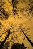 Мертвое дерево с солнечным светом Стоковое фото RF
