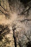 Мертвое дерево с солнечным светом Стоковое Изображение