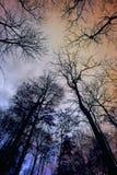 Мертвое дерево с солнечным светом Стоковые Фото