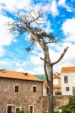 Мертвое дерево стоковые изображения
