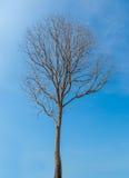 Мертвое дерево Стоковые Фото