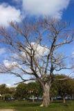 Мертвое дерево Стоковые Фотографии RF