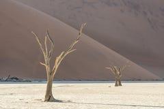 Мертвое дерево 12 Стоковые Изображения