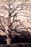 Мертвое дерево Стоковая Фотография RF