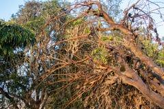 Мертвое или сухое дерево, лежа в поле стоковое фото