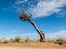 Мертвое и нагое дерево Стоковые Изображения