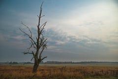Мертвое и сухое дерево в поле Стоковые Изображения RF