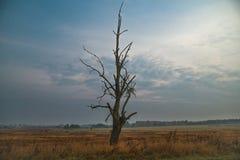 Мертвое и сухое дерево в поле Стоковое Фото