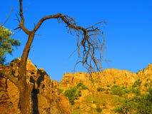 Мертвое миндальное дерево в ясной солнечности утра Стоковые Изображения RF