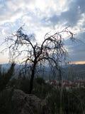 Мертвое миндальное дерево над деревней Стоковое Изображение RF