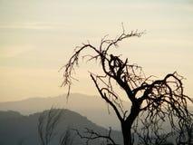 Мертвое миндальное дерево Стоковая Фотография