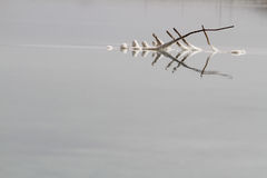 мертвое море соли Стоковые Фото