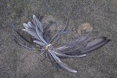 Мертвое перо птицы Стоковая Фотография RF