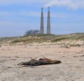 Мертвое уплотнение около электростанции Стоковое Фото