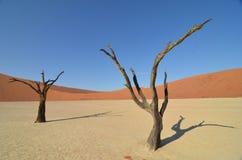 Мертвое Vlei в пустыне Namib, Намибии Стоковая Фотография RF