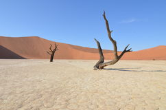 Мертвое Vlei в пустыне Namib, Намибии Стоковые Изображения