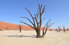 Мертвое Vlei в пустыне Namib, Намибии Стоковые Фотографии RF