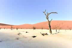 мертвое vlei Намибии Стоковые Фото