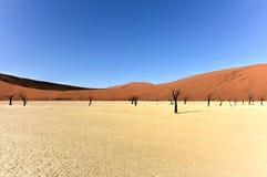 мертвое vlei Намибии Стоковое Фото
