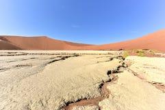 мертвое vlei Намибии Стоковые Фотографии RF
