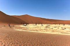 мертвое vlei Намибии Стоковое Изображение