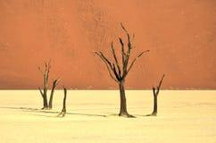 мертвое vlei Намибии Стоковое Изображение RF