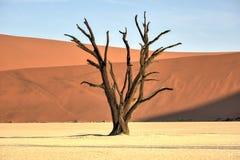мертвое vlei Намибии Стоковое фото RF